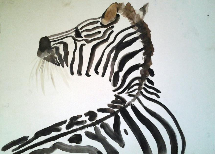 zebra watercolour illustration