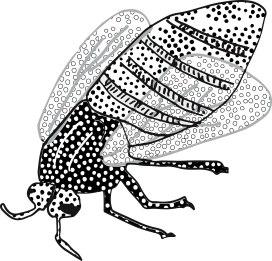 spotty fly illustration