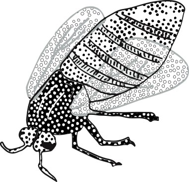 spotty fly illustration