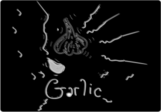 garlic_vector_illustration