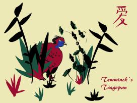 vector illustration in illustrator CC parttridge