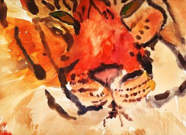 tiger watercolour illustration