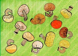 Mushrooms_web