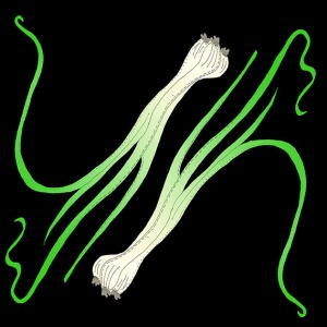 spring onions illustration
